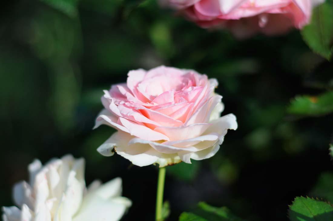 Искусственные цветы для домашнего интерьера: как эффектно украсить 322